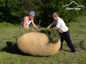 Hay as feed for hay milk