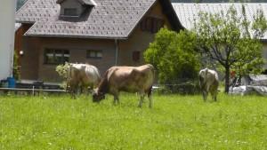 Farm in Mellau