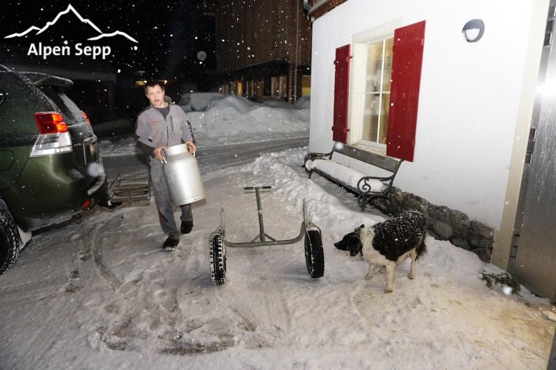 Fresh milk delivery alpine dairy