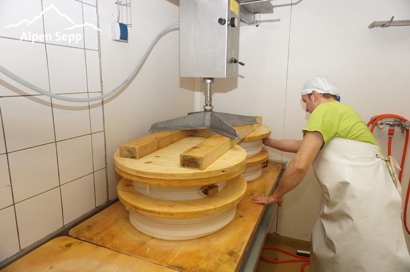 Mould mountain cheese into cheese moulds by help of press