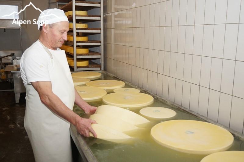 Fresh mountain / alpine cheese wheels in a salt bath