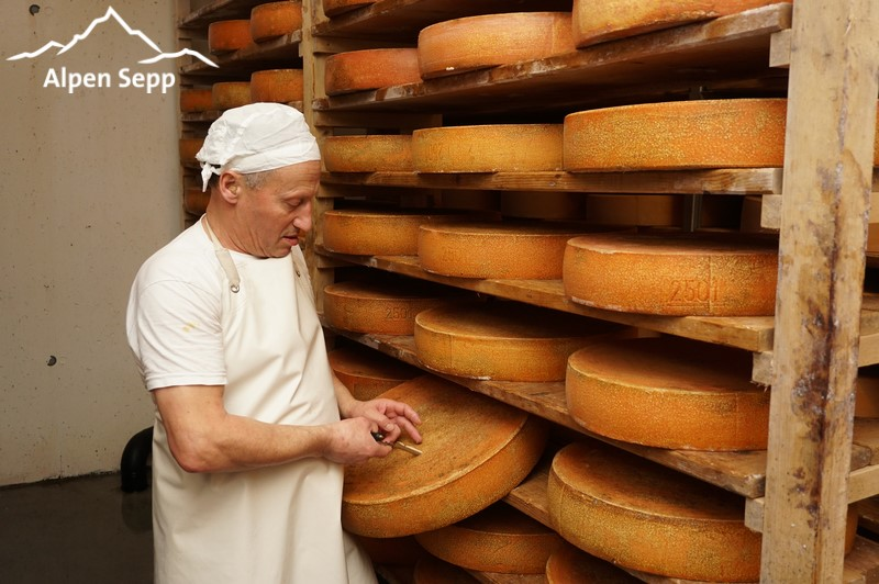 Testing maturation of mountain / alpine cheese